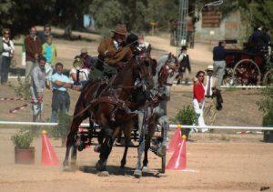 horse back ride exhibition