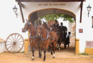 a day in the Hacienda